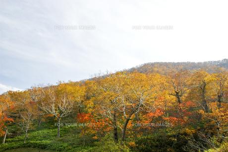 北海道・日勝峠の紅葉(黄葉)の写真素材 [FYI00627189]