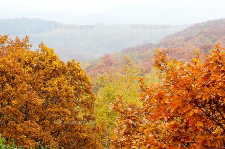 北海道・帯広の北 大雪山国立公園の紅葉(黄葉)の写真素材 [FYI00627196]