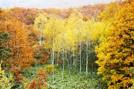 北海道・帯広の北 大雪山国立公園の紅葉(黄葉)の写真素材 [FYI00627197]