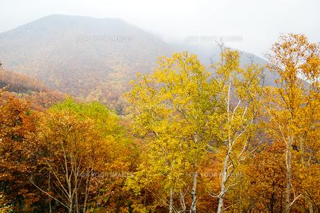 北海道・帯広の北 大雪山国立公園の紅葉(黄葉)の写真素材 [FYI00627205]