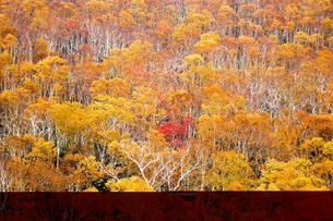 北海道・帯広の北 大雪山国立公園の紅葉(黄葉)の写真素材 [FYI00627210]