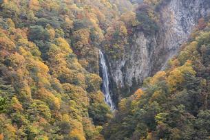 黄葉の澗満滝の写真素材 [FYI00627258]