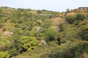 亜熱帯の森の写真素材 [FYI00627308]
