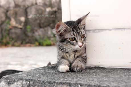 腹ばいの子猫の写真素材 [FYI00627394]