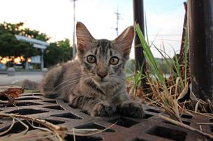 腹ばいの子猫の写真素材 [FYI00627395]