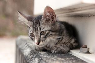 腹ばいの子猫の写真素材 [FYI00627396]