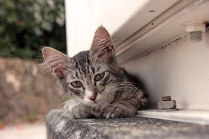腹ばいの子猫の写真素材 [FYI00627397]