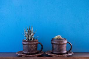 青背景に置かれた観葉植物の写真素材 [FYI00627751]