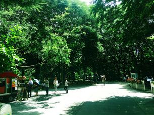 新宿散歩2の写真素材 [FYI00627818]