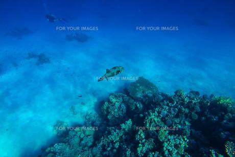 fishes_crustaceansの素材 [FYI00628104]