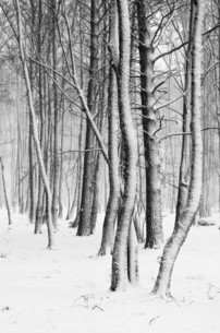 Snow covered tree trunks close-upの写真素材 [FYI00628199]