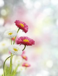 plants_flowersの写真素材 [FYI00629138]