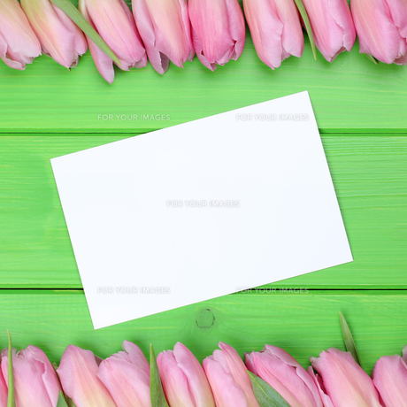 frame from tulips flowers with greeting card and copy spaceの写真素材 [FYI00630225]