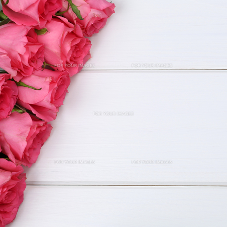 roses floral birthday or mother's day with copy spaceの写真素材 [FYI00630229]