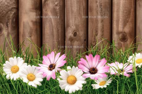 plants_flowersの写真素材 [FYI00630624]