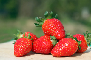 fruits_vegetablesの素材 [FYI00630675]