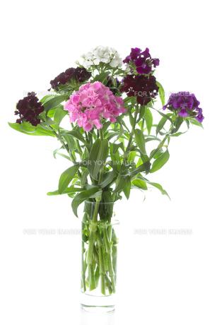 plants_flowersの素材 [FYI00631363]