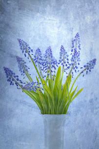 plants_flowersの素材 [FYI00631472]