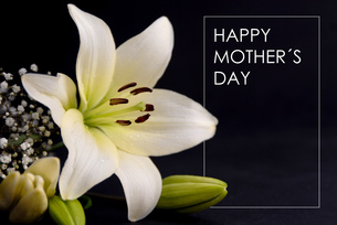 Happy Mothers day gift cardの写真素材 [FYI00631644]