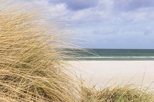 Dune grass on the Baltic Seaの素材 [FYI00631881]
