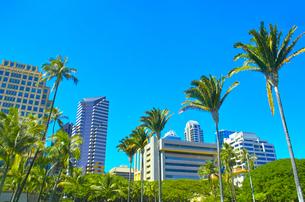 ハワイ ホノルル市内の町並みの写真素材 [FYI00632518]