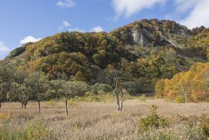 雨飾地高原の紅葉の写真素材 [FYI00632545]