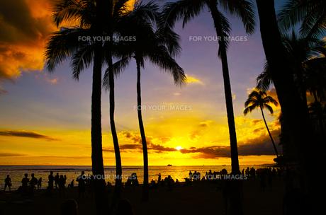 ハワイ ワイキキビーチからの夕日の写真素材 [FYI00633116]