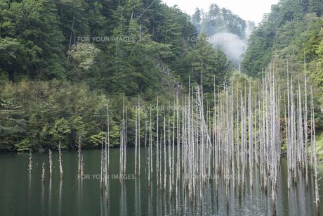 色づく木曽自然湖の写真素材 [FYI00633124]