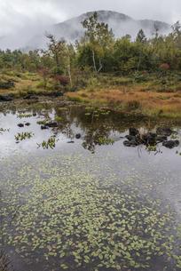 もやに包まれる偲ぶの池の写真素材 [FYI00633125]