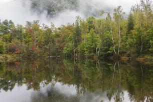 色づくまいめの池の写真素材 [FYI00633127]
