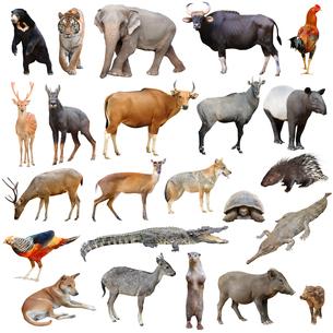asia animals isolatedの写真素材 [FYI00633478]