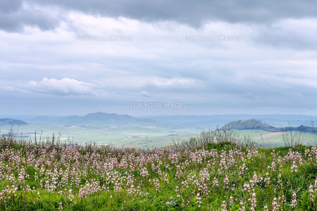 sicilian landscape in rainy spring dayの素材 [FYI00633727]