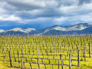 empty vineyard in Etna winemaking region in springの写真素材 [FYI00633746]
