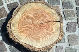 Jahresringe  Jahrring  Holzringの素材 [FYI00635831]