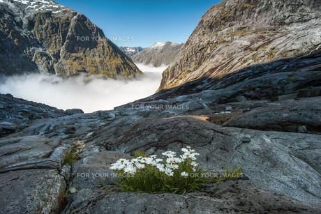 gertrude valley in fiordland national park,new zealandの写真素材 [FYI00636125]