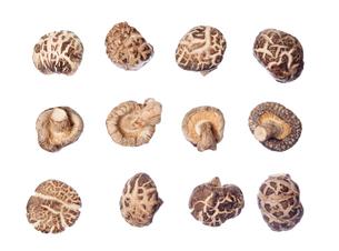 many shiitake mushroomsの写真素材 [FYI00636487]
