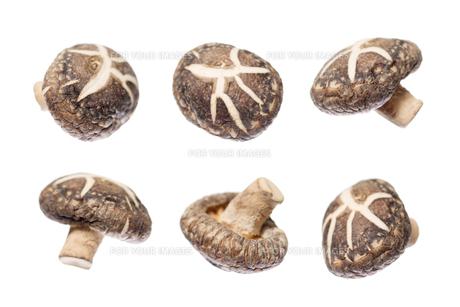 Shiitake mushroomsの写真素材 [FYI00636494]