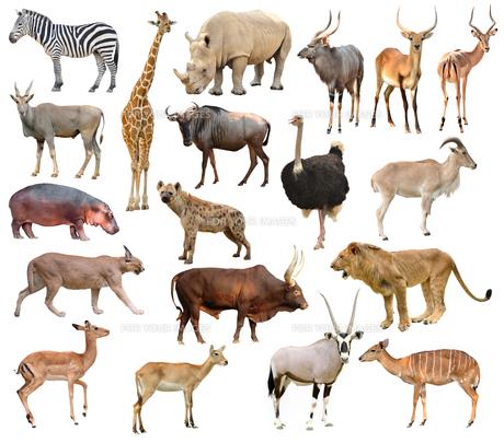 africa animalsの写真素材 [FYI00637094]