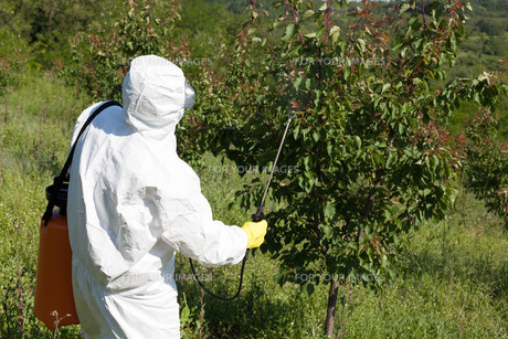 Fruit tree sprayingの写真素材 [FYI00639669]