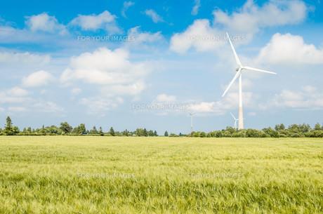 Summer landscape with wind generatorsの写真素材 [FYI00640011]