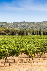 Provence vineyardの写真素材 [FYI00640553]