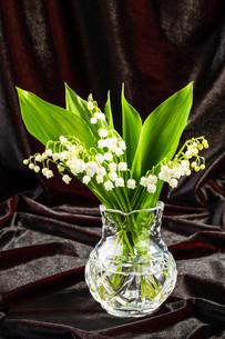 lilies of the valley in flowerpotの写真素材 [FYI00640770]