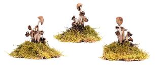 Mushroomsの写真素材 [FYI00641018]