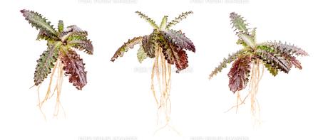 Prickly plantの素材 [FYI00641021]