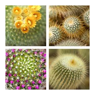 Cactusの素材 [FYI00641128]