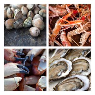Sea foodの素材 [FYI00641129]