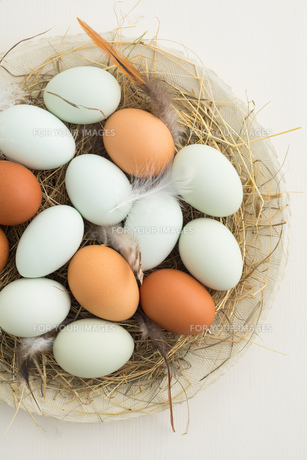 eggs in nestの素材 [FYI00642882]