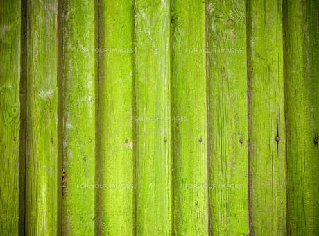 Mossy wooden background textureの写真素材 [FYI00643027]