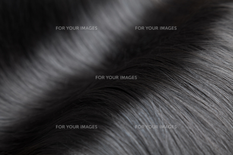 Closeup on luxurious glossy black hairの写真素材 [FYI00643029]