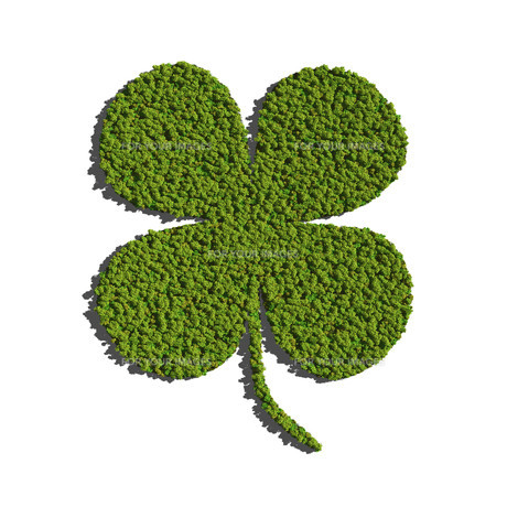 Four leaf clover create by tree white backgroundの写真素材 [FYI00643126]